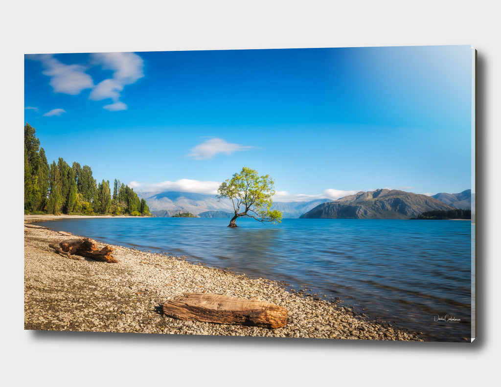 A symbolic willow tree on a clear morning at Lake Wanaka