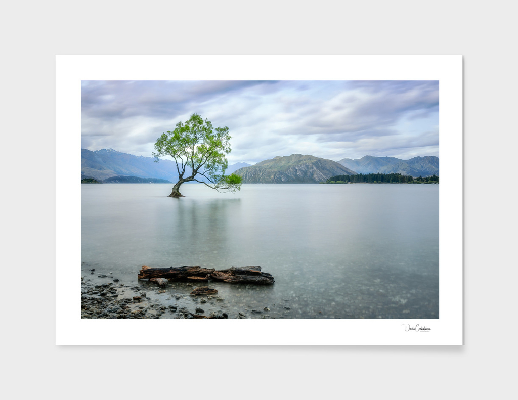 A story of beauty and survival at Lake Wanaka.
