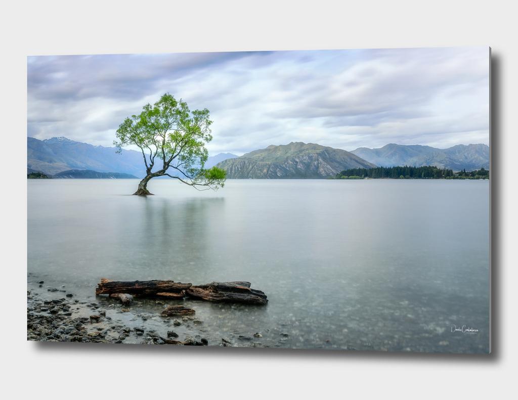 A story of beauty and survival at Lake Wanaka.