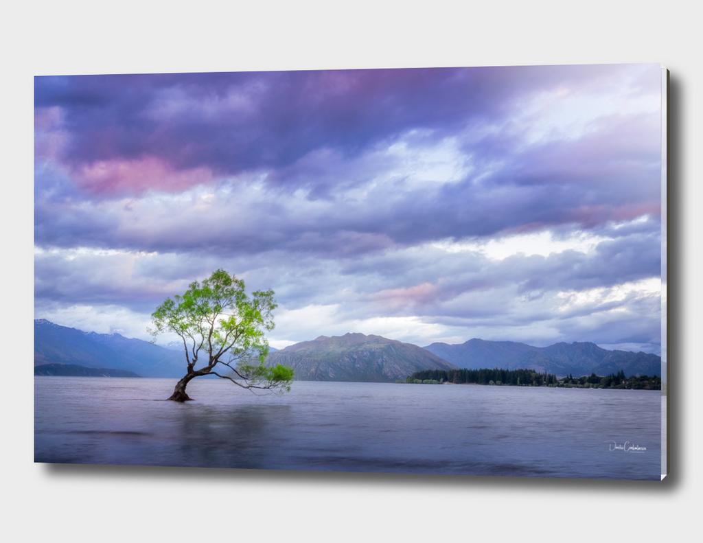 Wanaka Tree Sunset