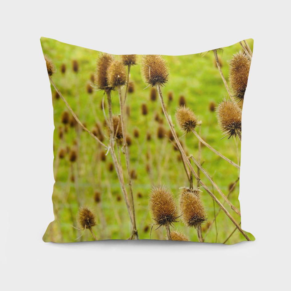 Dutch reeds