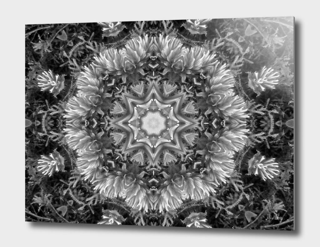 Soft Grey Dahlia Kaleidoscope