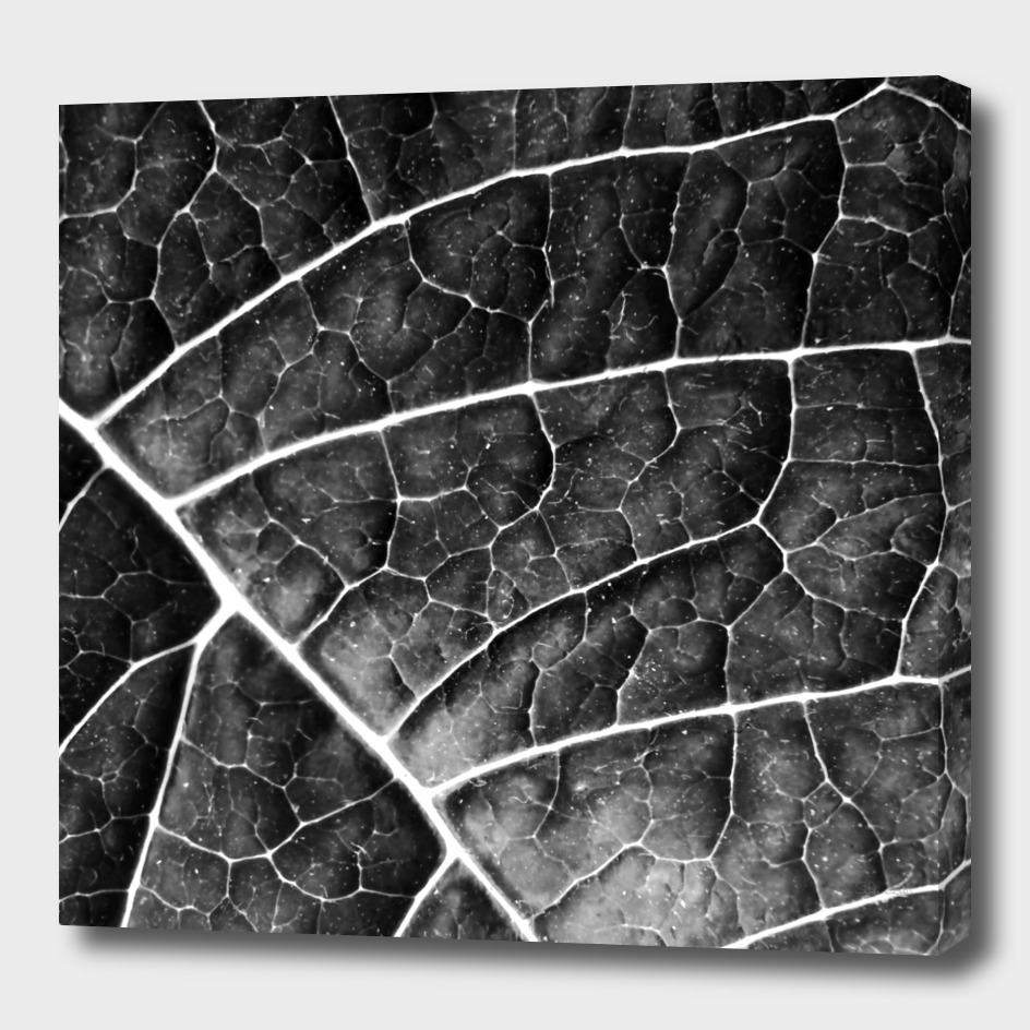LEAF STRUCTURE no2A BLACK AND WHITE