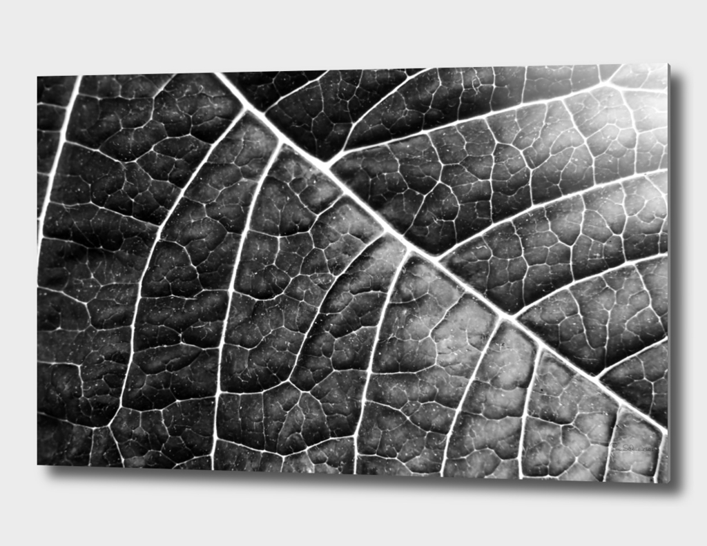 LEAF STRUCTURE no2 BLACK AND WHITE