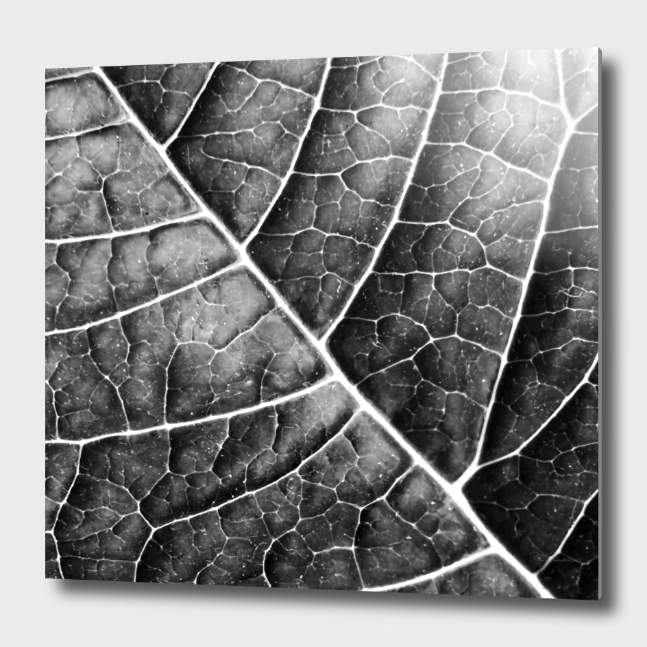 LEAF STRUCTURE no2b BLACK AND WHITE