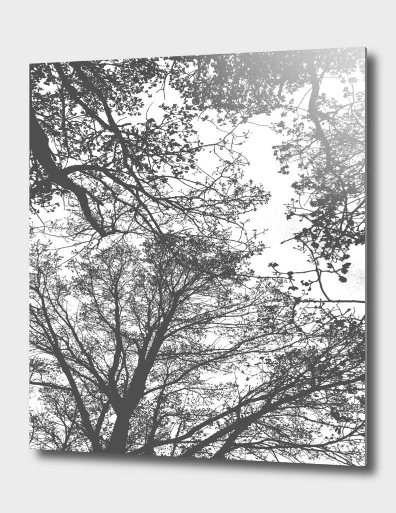 Abstract Trees Grey