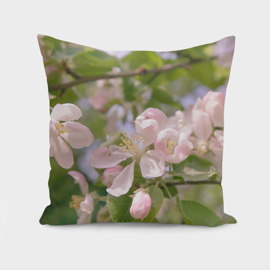 Spring Apple Tree White Pink Flowers Sunlight Retro