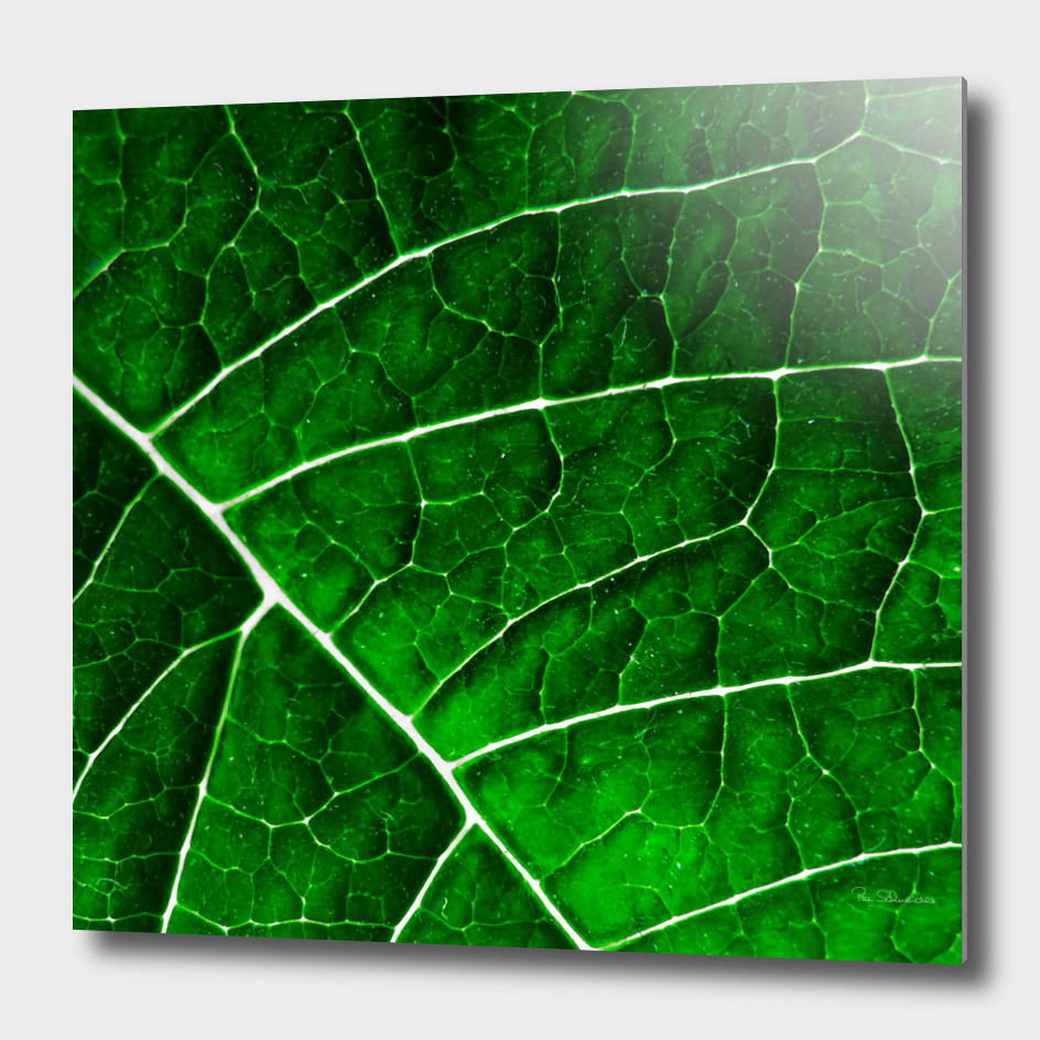 LEAF STRUCTURE GREENERY no2