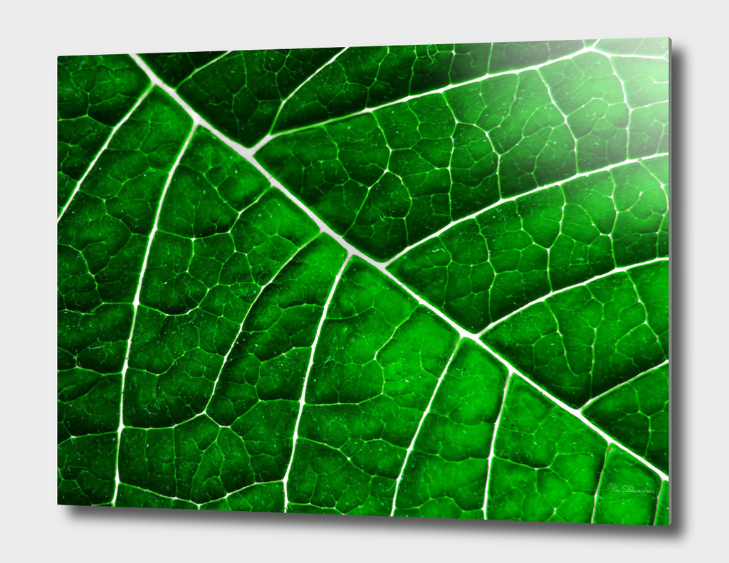 LEAF STRUCTURE GREENERY no3