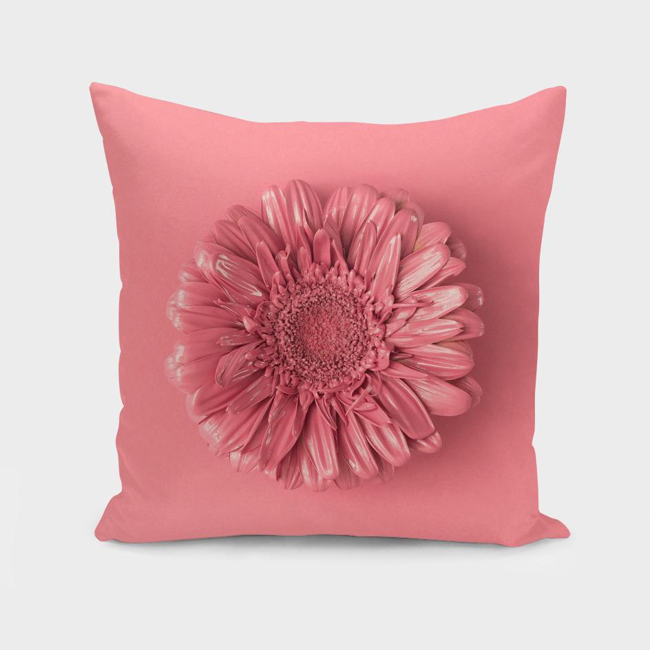 Daisy Flower Pink Background