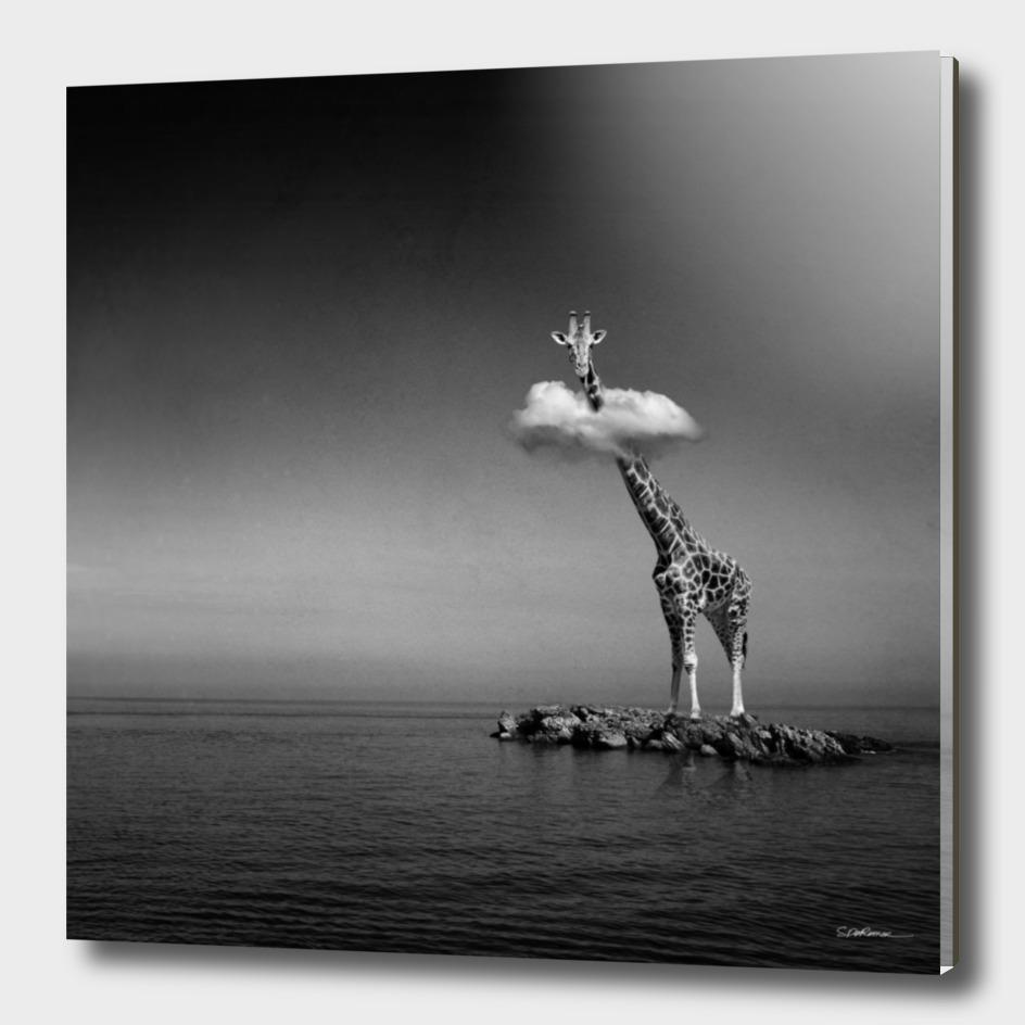 Giraffe & Clouds