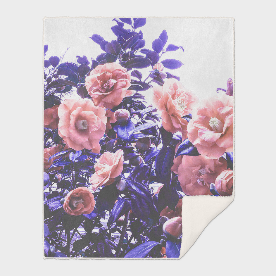 Wild Roses - Ultra Violet, Coral and Peach
