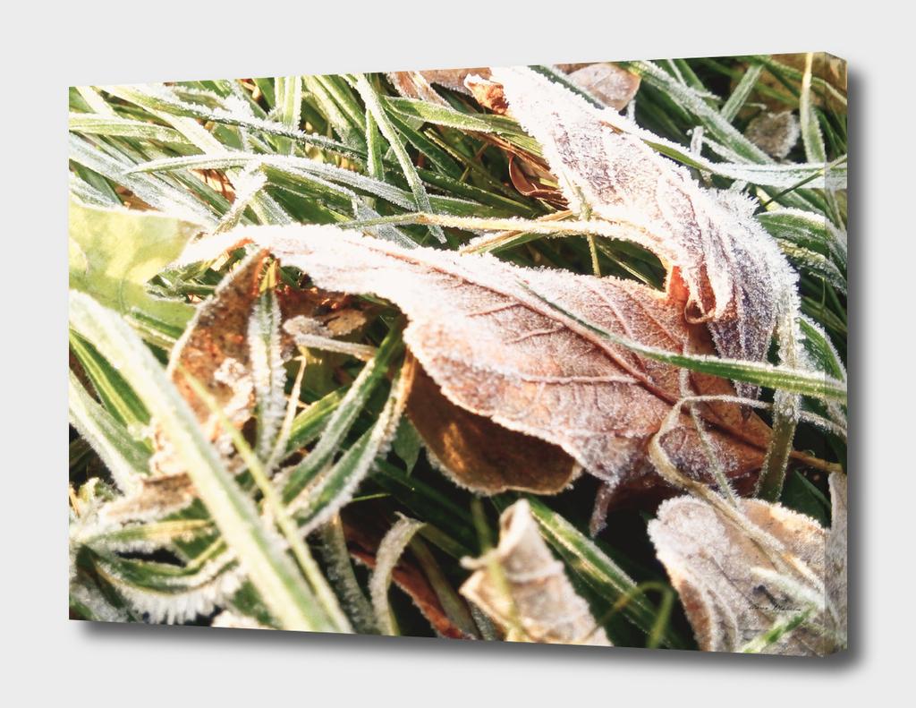 Winter Yellow Leaves Mobilestock