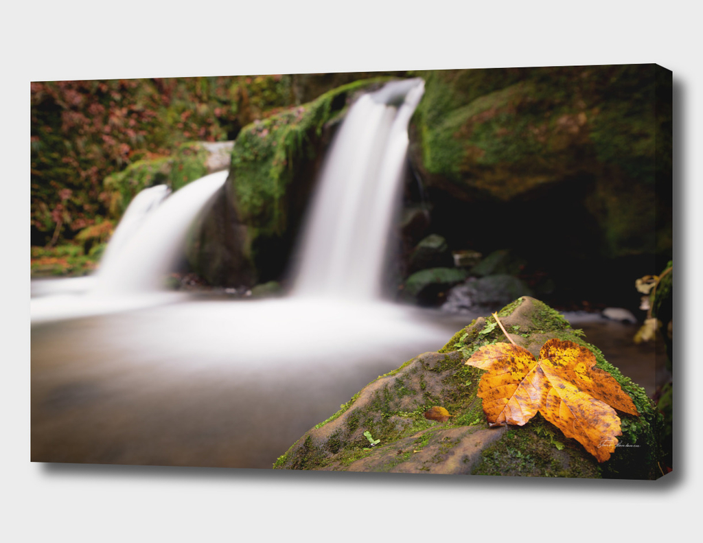 Leaf by the Waterfall