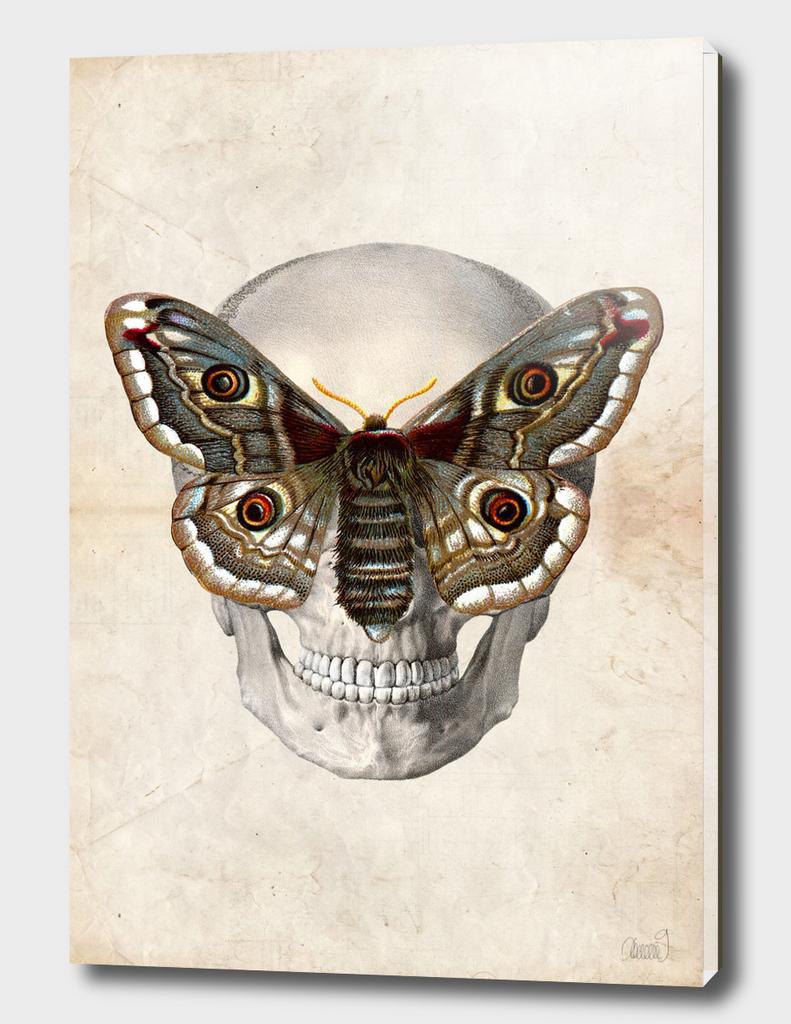 Visionary Skull