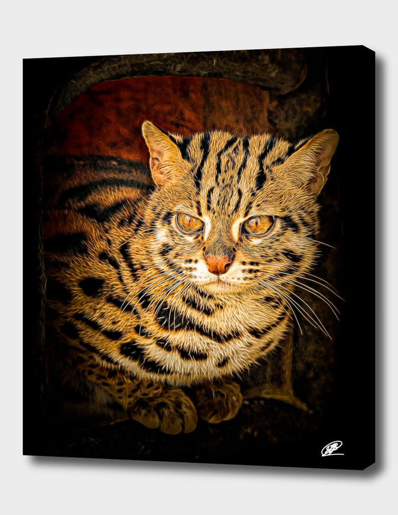 Wild kitty photography processed as a painting