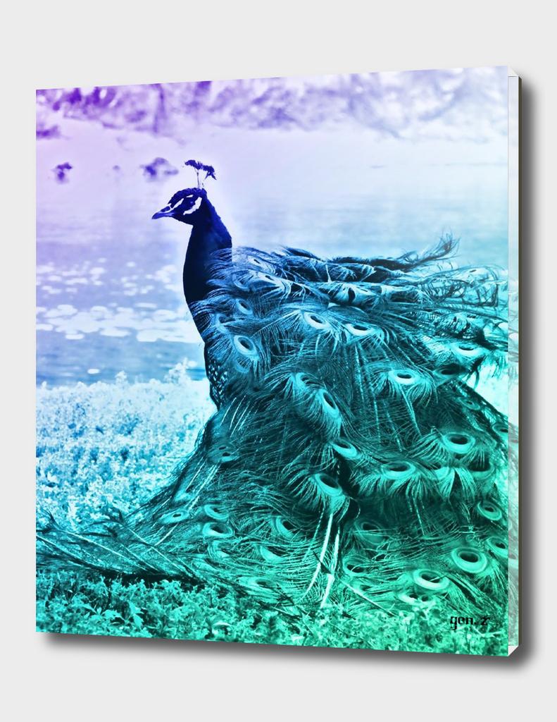 Blue Peacock by GEN Z