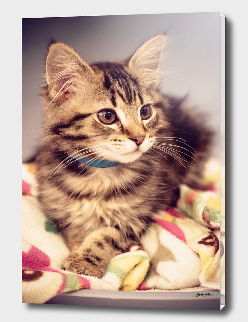 Tabby kitten in vintage colours