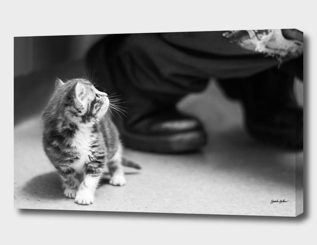 Tiny Kitten