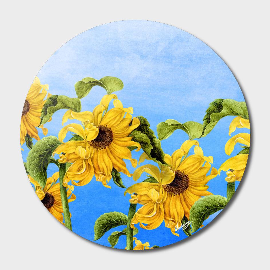 Where the Sunflowers Grow