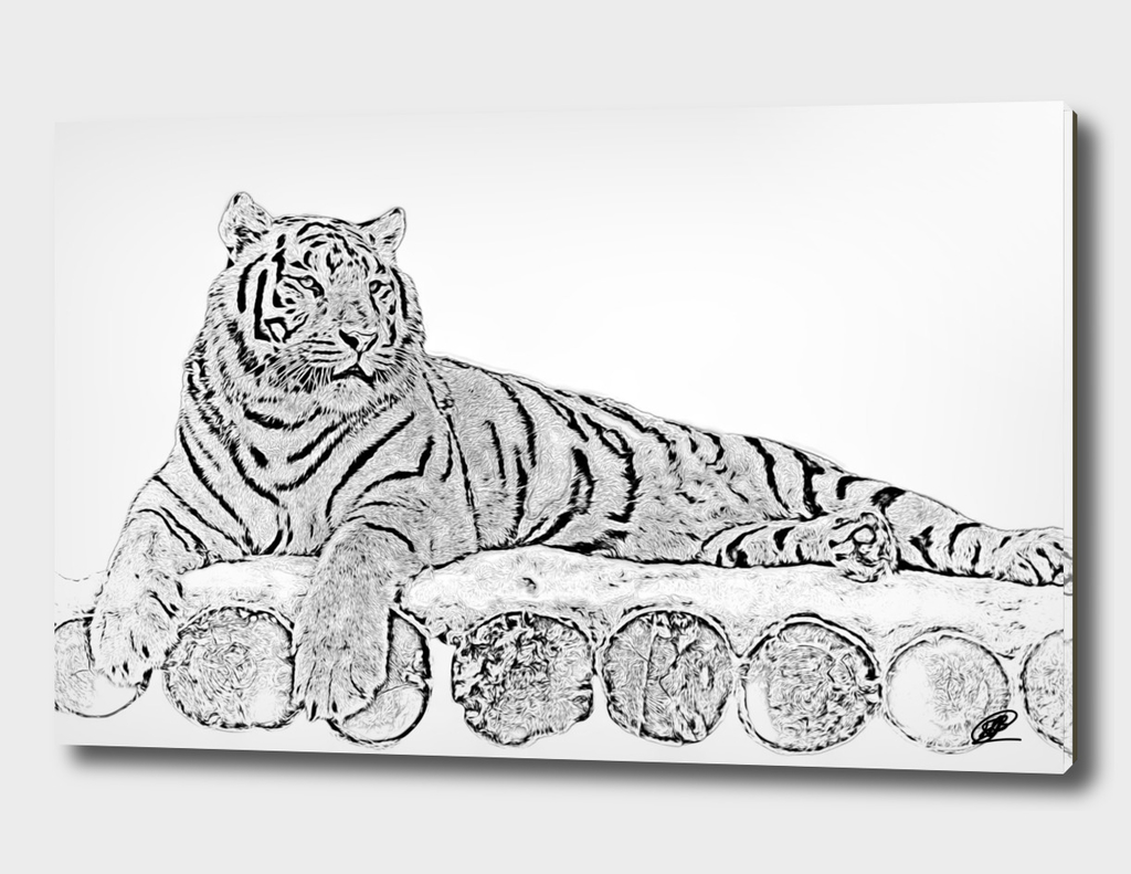Tiger on wooden stage monochrome processing
