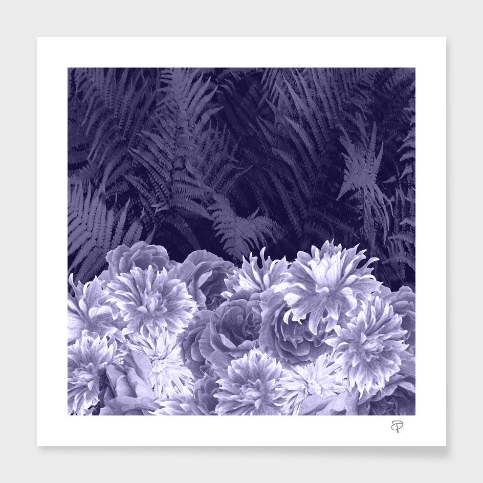 Dark Shades Of Lavender