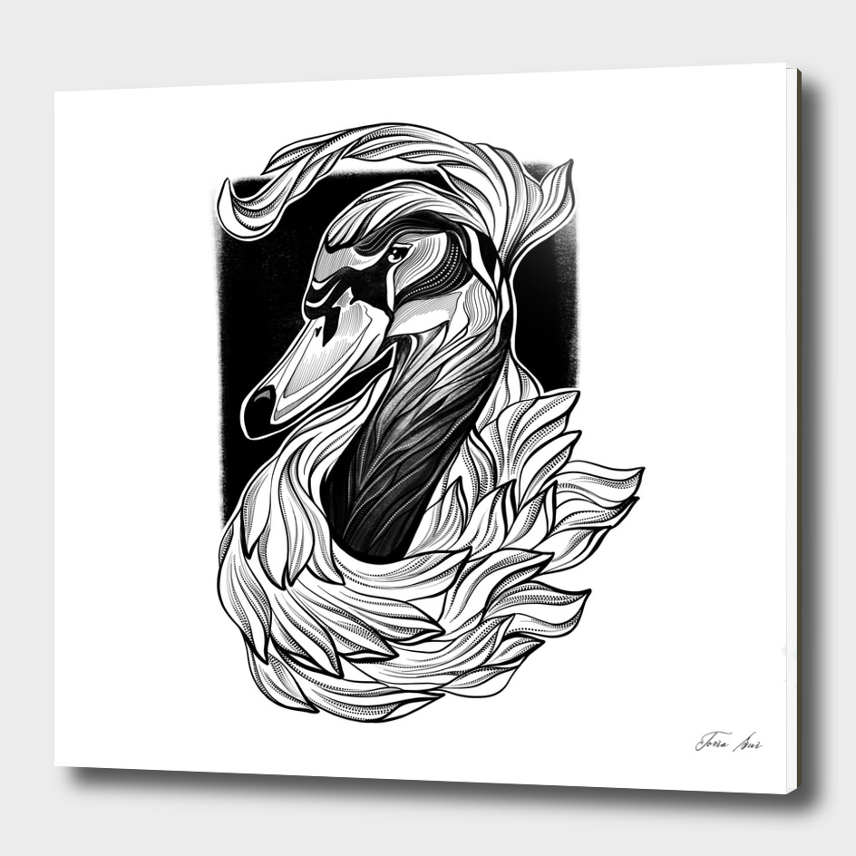 """Black Swan"" inked black line graphic illustration"