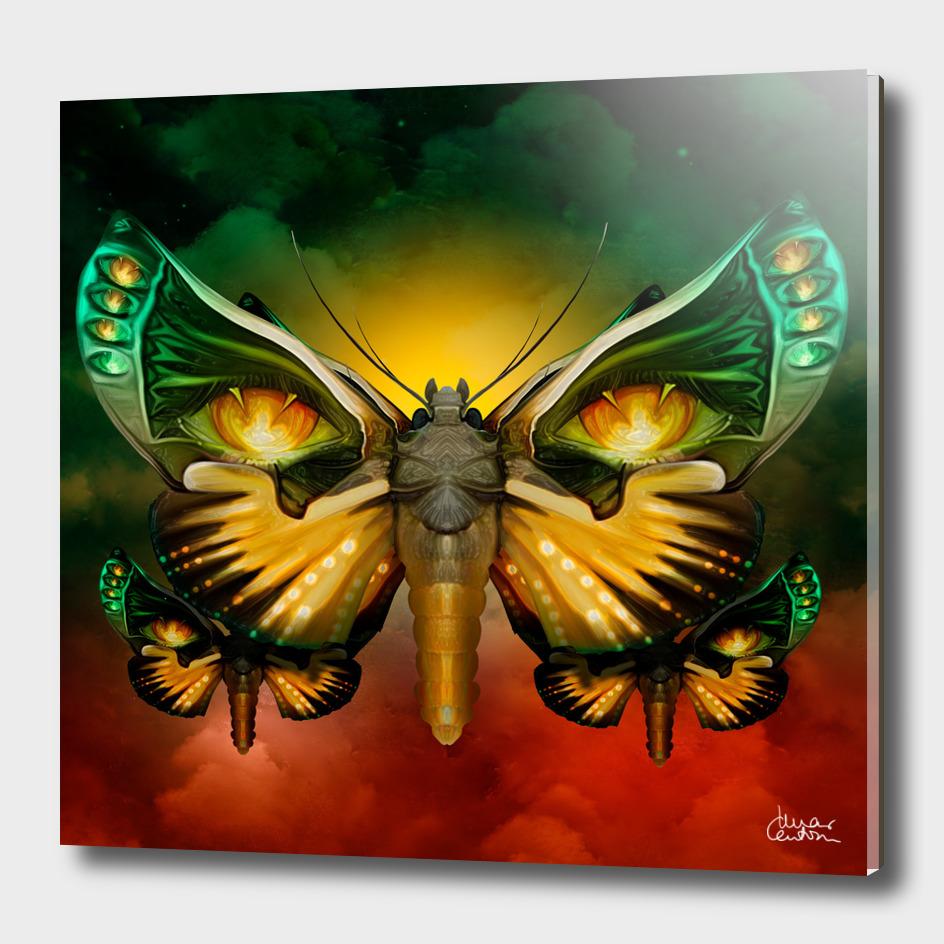 """""""Dark butterflies flying over a sky of fire"""""""