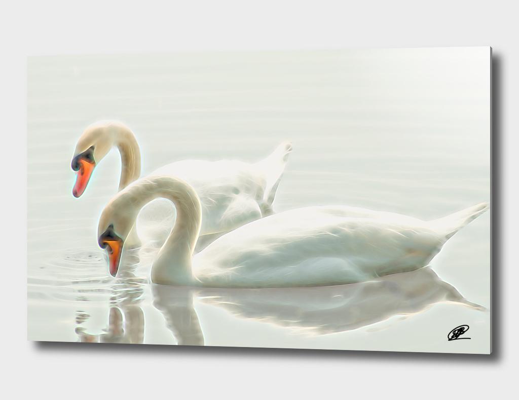 Swangs couple on the lake aquarel