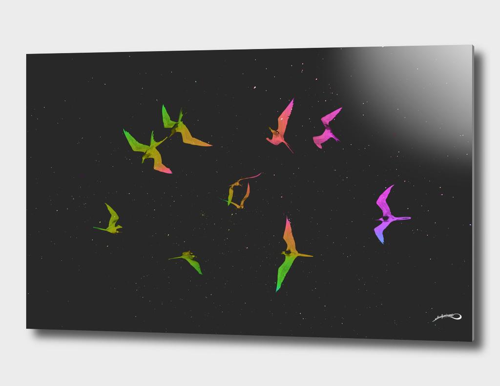 The magnificent frigatebirds *L* by #Bizzartino