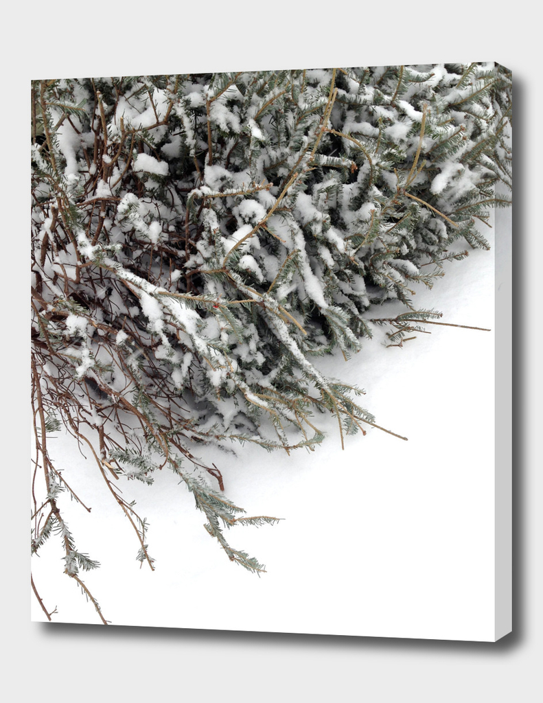 Christmas tree lying down on white snow