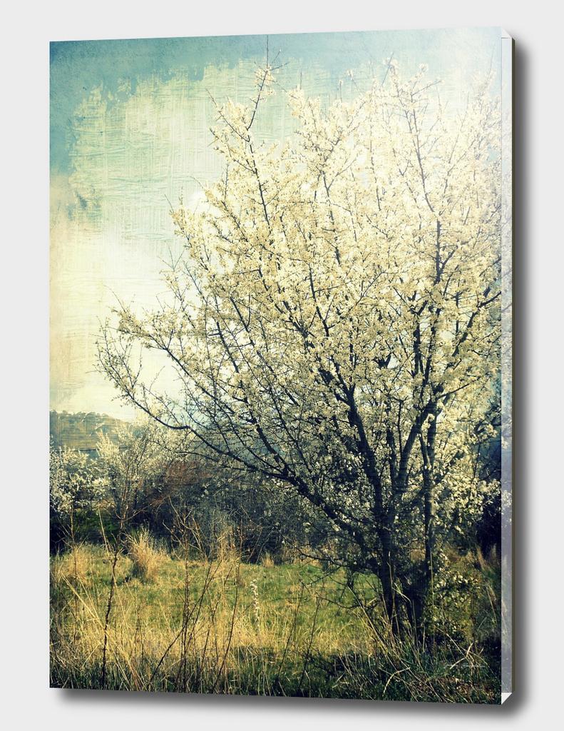 Tree Blooming