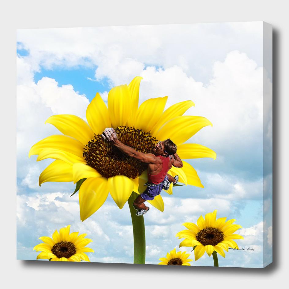 Yellow flower climbing