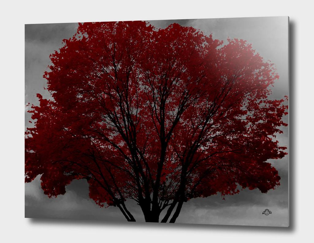 Red Tree, Grey Sky