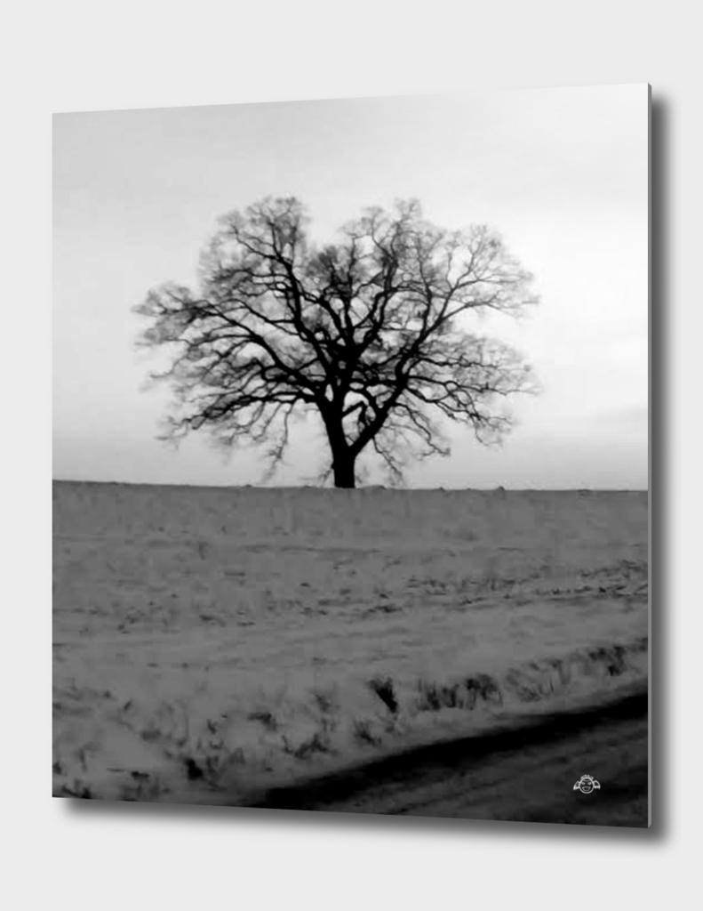 Winter Dead Tree