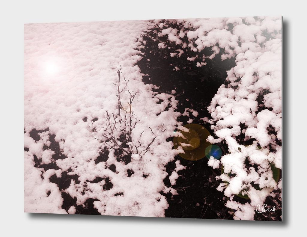 Snow Bushes