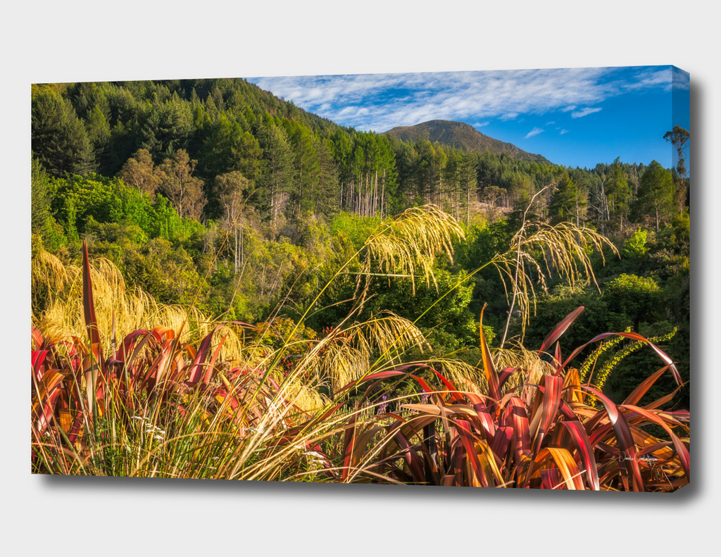 Alpine forest scenery at Wilson Bay in New Zealand