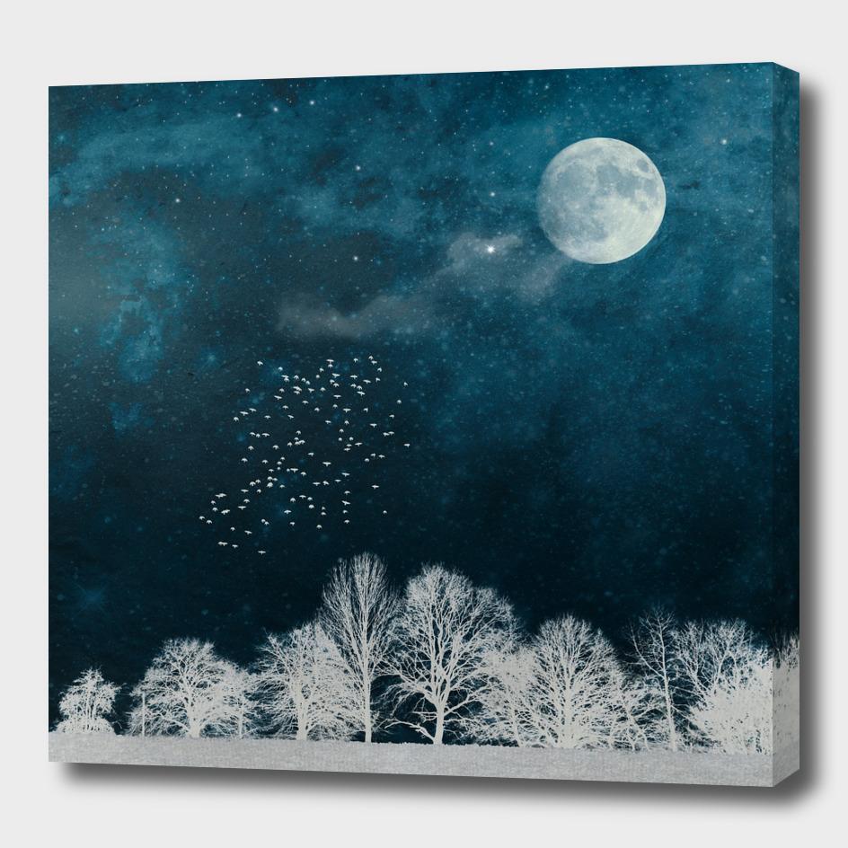 nightscape blue white