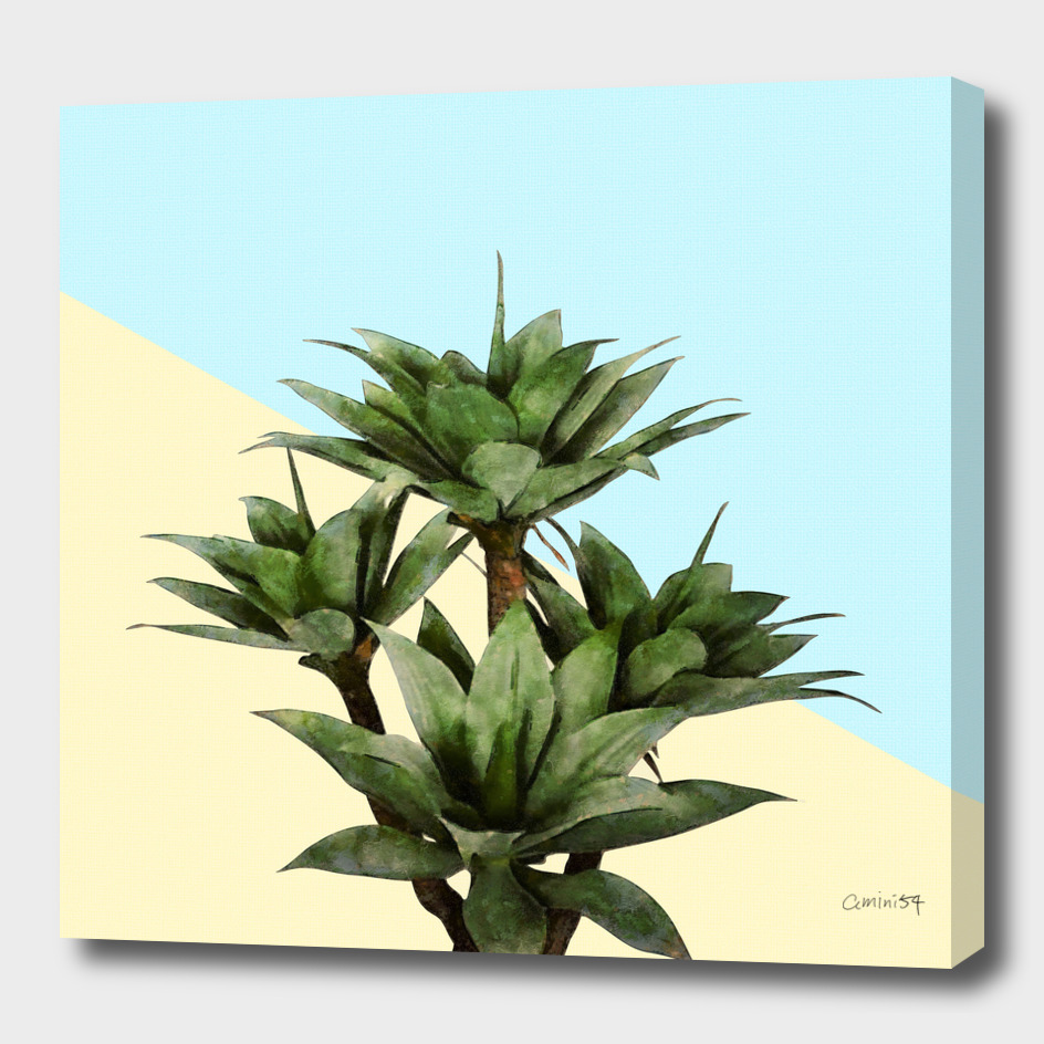 Agave on Lemon and Teal Wall