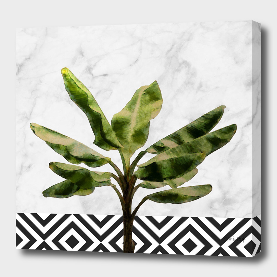 Banana Plant on Marble and Checker Wall