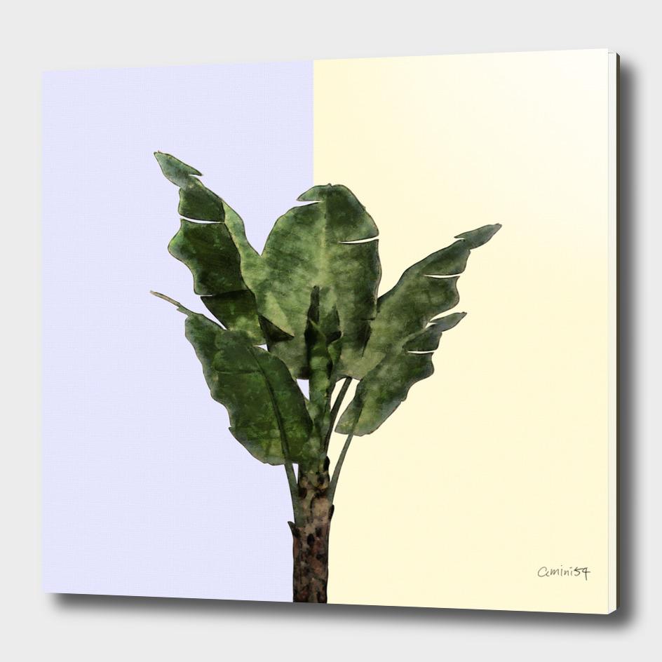 Banana Plant on Blue and Lemon Wall