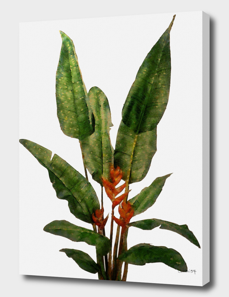 Bird of Paradise Plant on White Wall