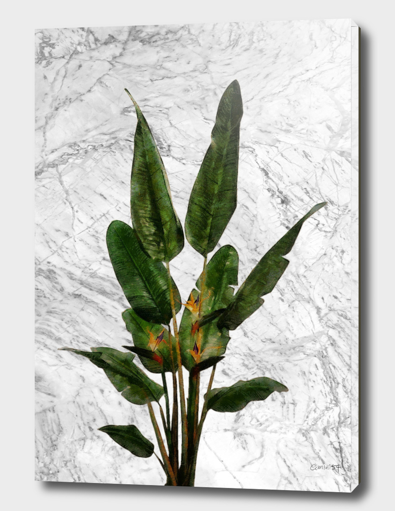 Bird of Paradise Plant on White Marble Wall