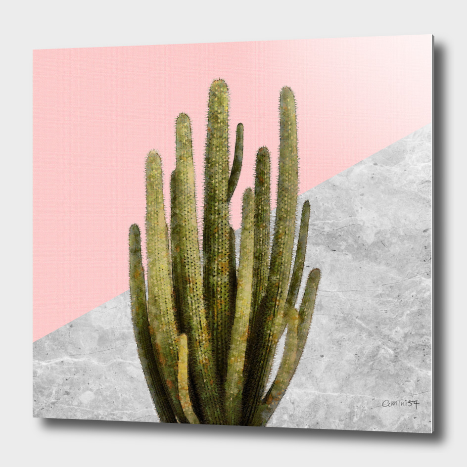 Cactus Plant on Pink and Concrete Wall