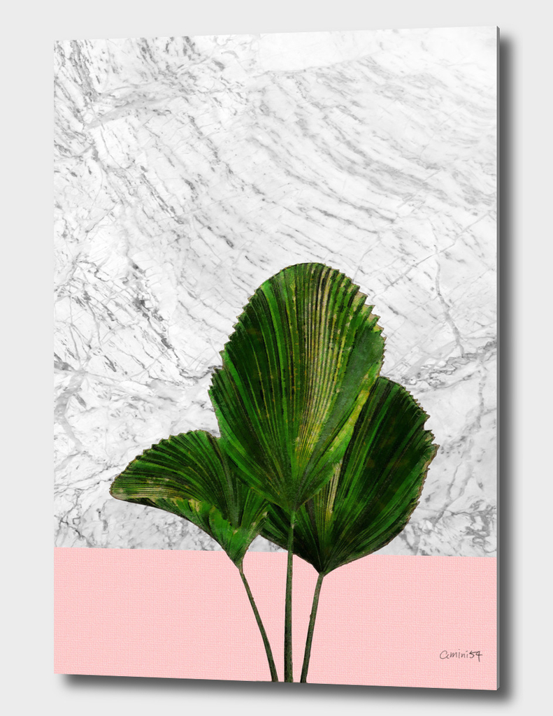 Palm Plant on Pink and White Marble Wall