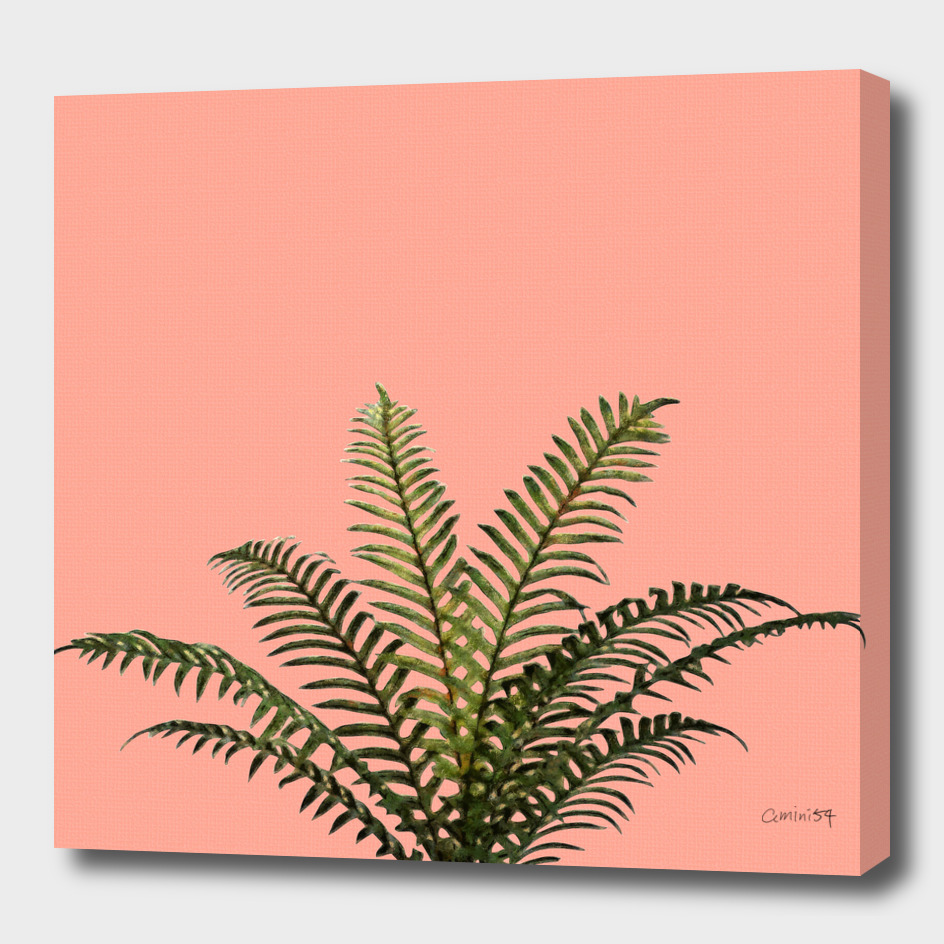 Palm Plant on Coral Pink Wall