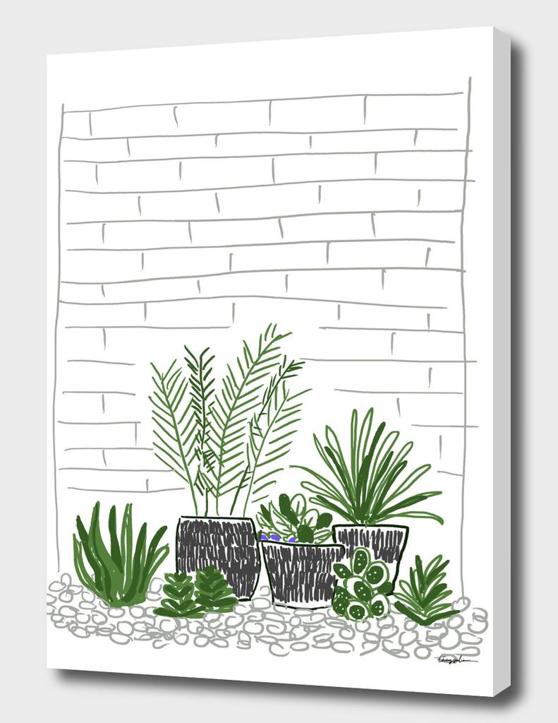 backyard plant