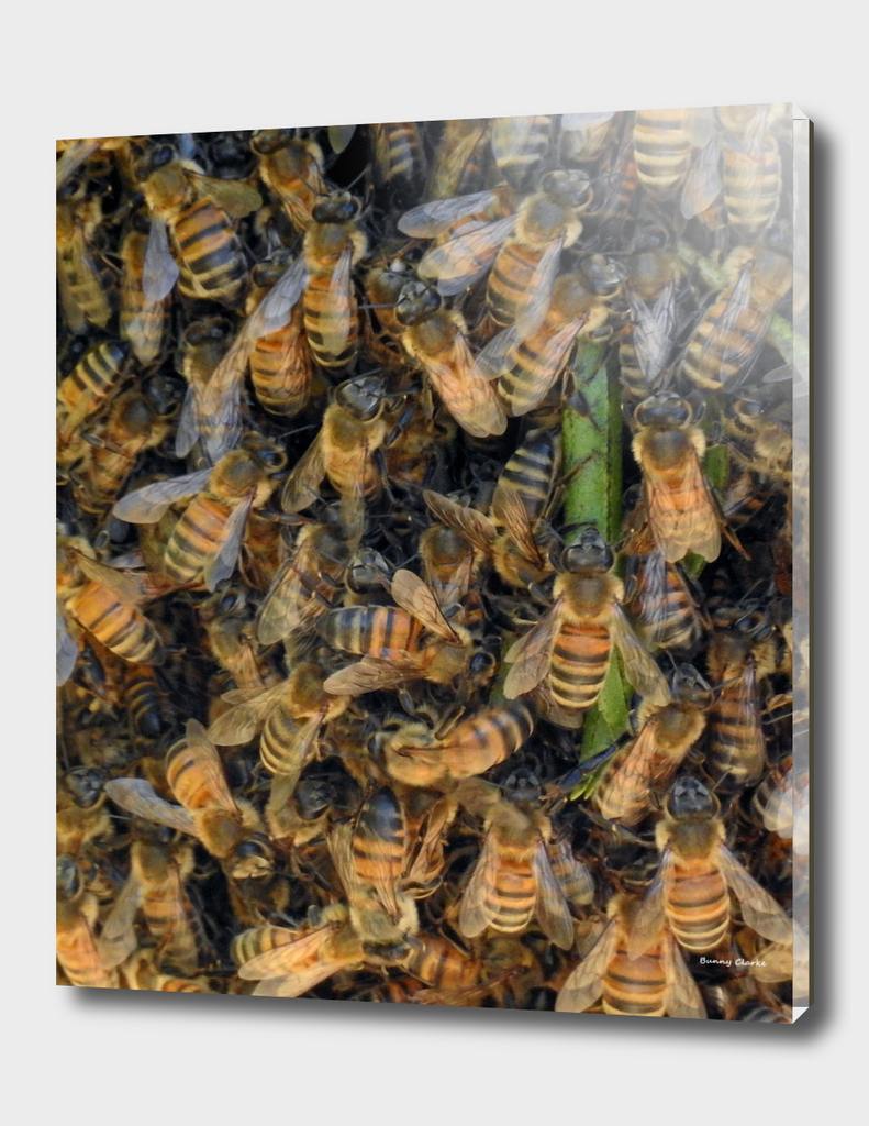 Beautiful Bees