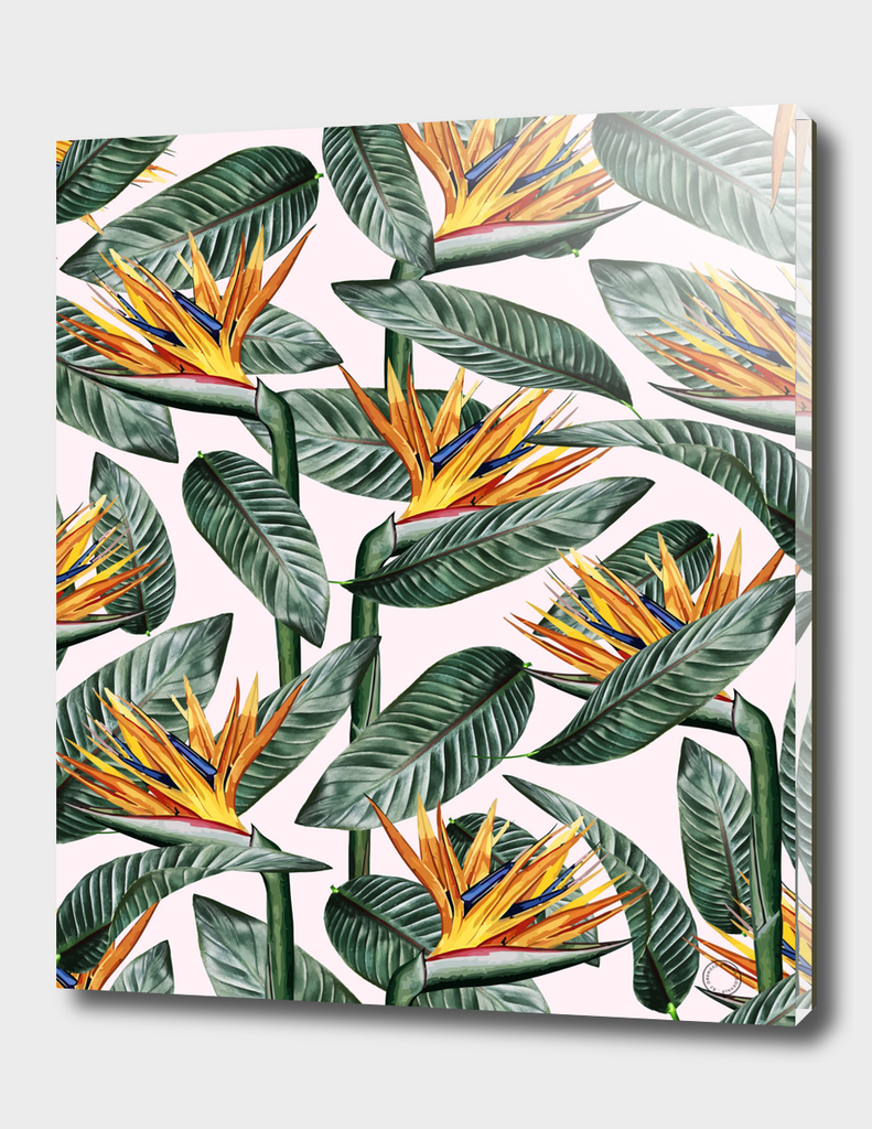 Bird of Paradise Pattern