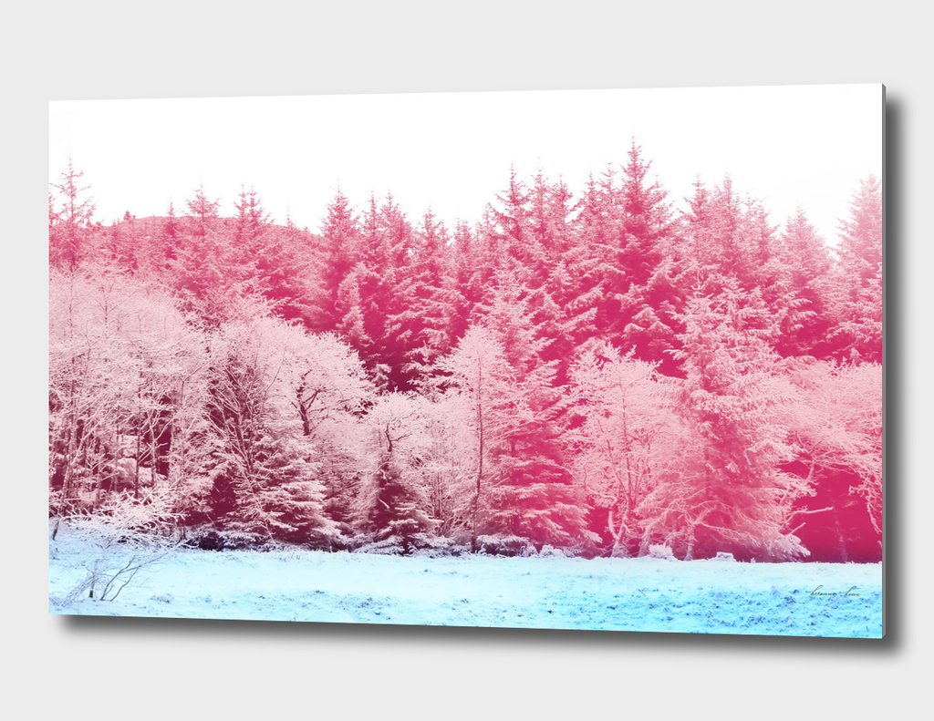 anoch mor snow pink blue